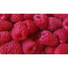 Саженцы малины Корпико (Korpiko Raspberry)