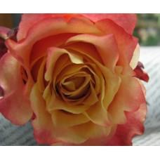 Rose 3D (Роза 3Д)